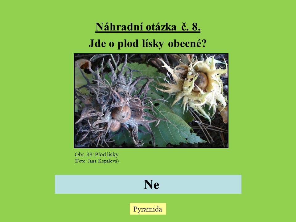 Pyramida Náhradní otázka č.8. Jde o plod lísky obecné.
