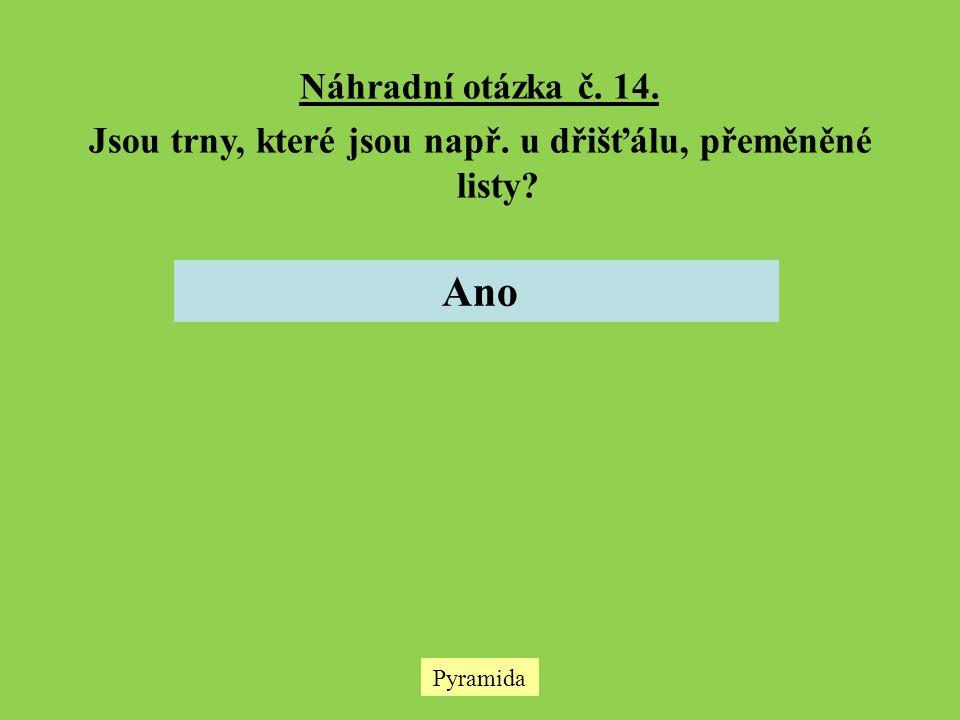 Pyramida Náhradní otázka č. 14. Jsou trny, které jsou např. u dřišťálu, přeměněné listy? Ano