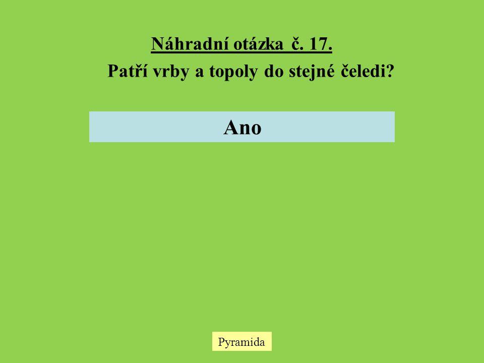 Pyramida Náhradní otázka č. 17. Patří vrby a topoly do stejné čeledi? Ano