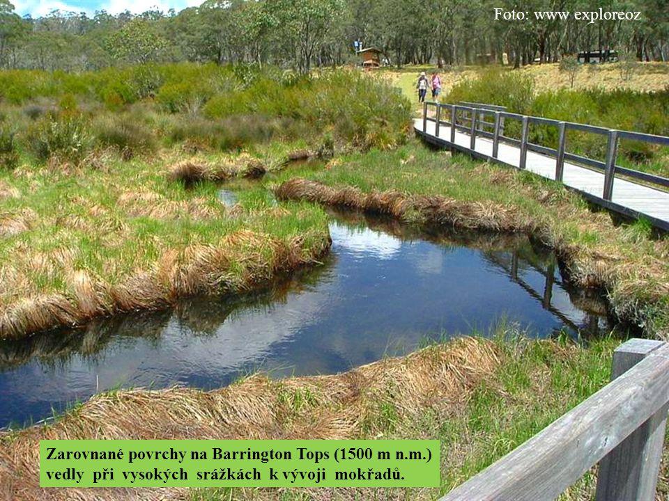 Foto: www exploreoz Zarovnané povrchy na Barrington Tops (1500 m n.m.) vedly při vysokých srážkách k vývoji mokřadů.