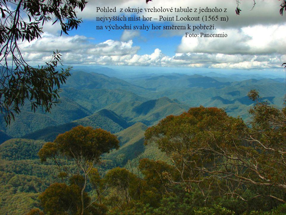 Pohled z okraje vrcholové tabule z jednoho z nejvyšších míst hor – Point Lookout (1565 m) na východní svahy hor směrem k pobřeží. Foto: Panoramio