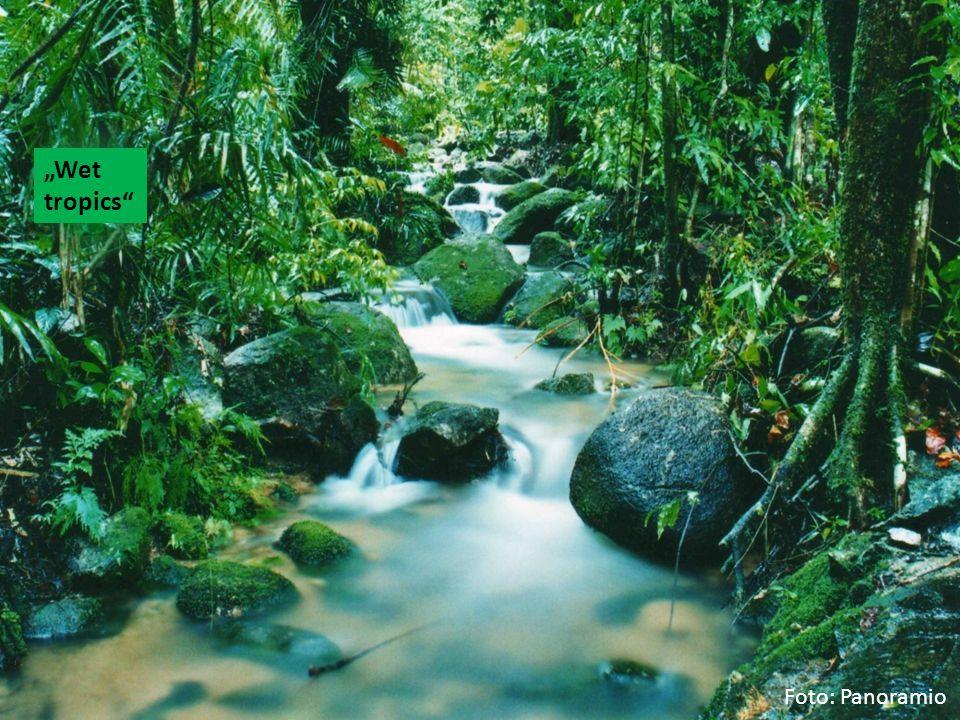 """""""Wet tropics"""" Foto: Panoramio"""