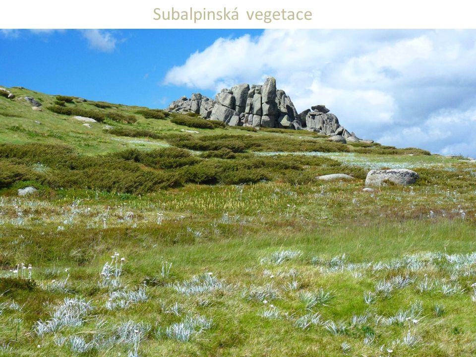 Subalpinská vegetace