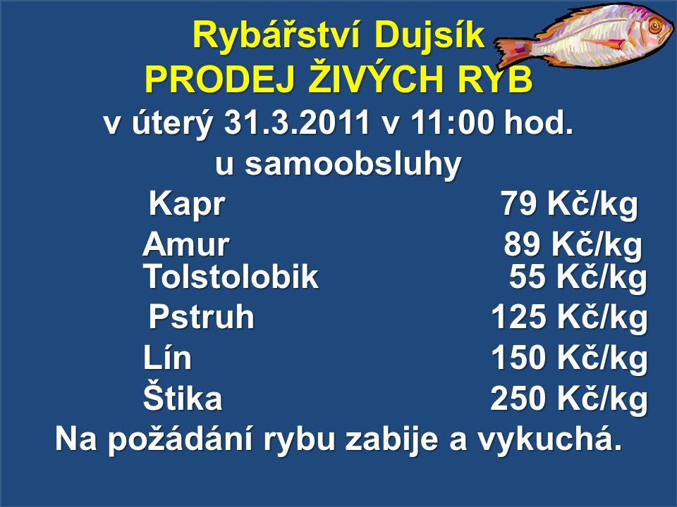Rybářství Dujsík PRODEJ ŽIVÝCH RYB v úterý 31.3.2011 v 11:00 hod. u samoobsluhy Kapr 79 Kč/kg Kapr 79 Kč/kg Amur 89 Kč/kg Tolstolobik 55 Kč/kg Pstruh