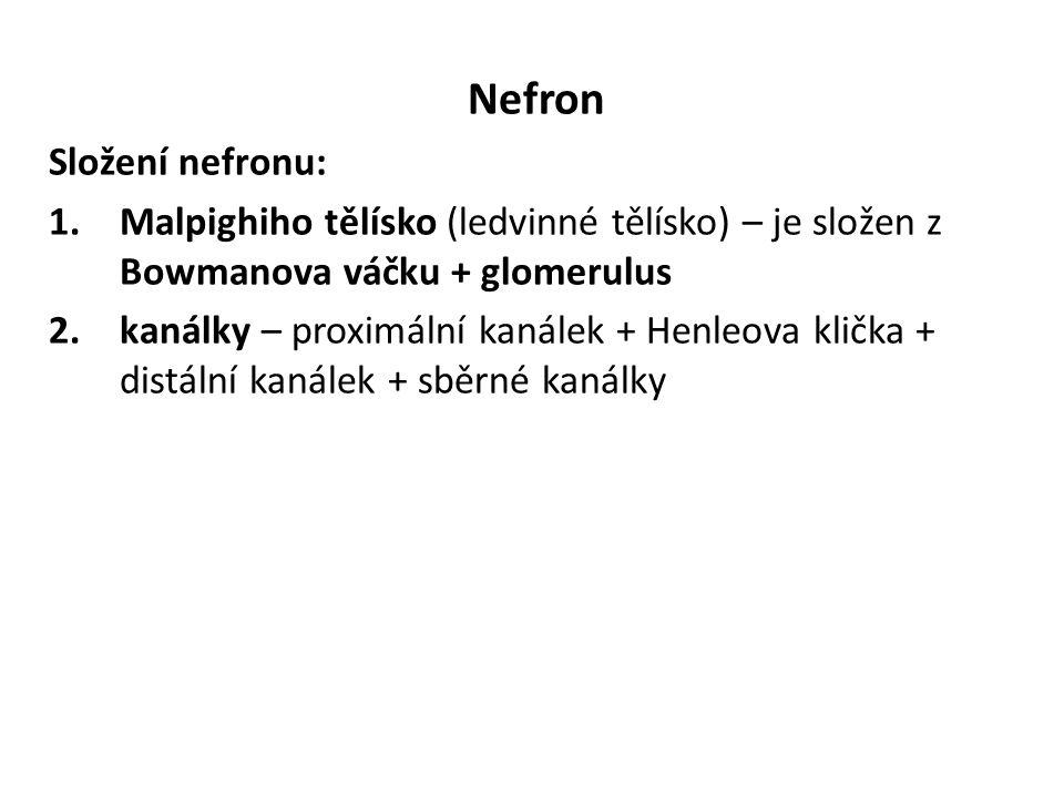 Nefron Složení nefronu: 1.Malpighiho tělísko (ledvinné tělísko) – je složen z Bowmanova váčku + glomerulus 2.kanálky – proximální kanálek + Henleova klička + distální kanálek + sběrné kanálky