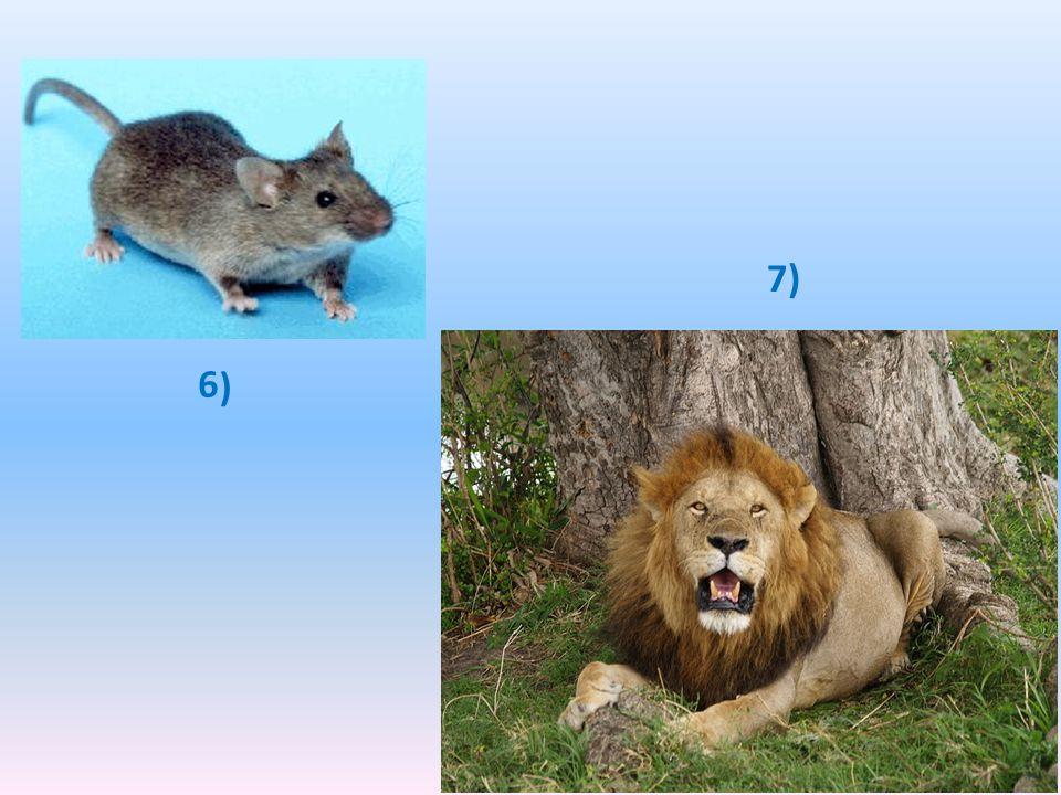 OBRÁZEK 1.: LIŠKA – CHYTRÁ, LSTIVÁ, MAZANÁ OBRÁZEK 2.: VLK – ZLÝ, ZÁKEŘNÝ, VĚČNĚ HLADOVÝ OBRÁZEK 1.: JEHNĚ – BEZBRANNÉ, HODNÉ, NAIVNÍ OBRÁZEK 1.: OSEL – HLOUPÝ, TVRDOHLAVÝ, POMALÝ OBRÁZEK 1.: VRÁNA – MLSNÁ, PYŠNÁ, OTRAVNÁ OBRÁZEK 1.: MYŠ – RYCHLÁ, HBITÁ, DOMÝŠLIVÁ OBRÁZEK 1.: LEV – SILNÝ, PANOVAČNÝ, KRUTÝ ŘEŠENÍ ÚKOLŮ K OBRÁZKŮM: