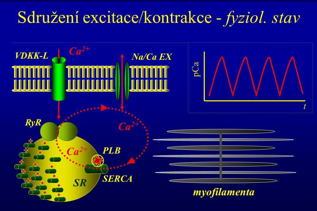 Sdružení excitace/kontrakce - fyziol. stav RyR SR myofilamenta Ca 2+ PLB SERCA pCa t VDKK-L Na/Ca EX Ca 2+