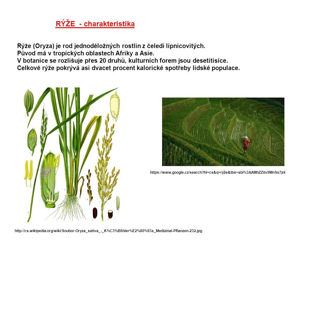 RÝŽE - charakteristika Rýže (Oryza) je rod jednoděložných rostlin z čeledi lipnicovitých. Původ má v tropických oblastech Afriky a Asie. V botanice se