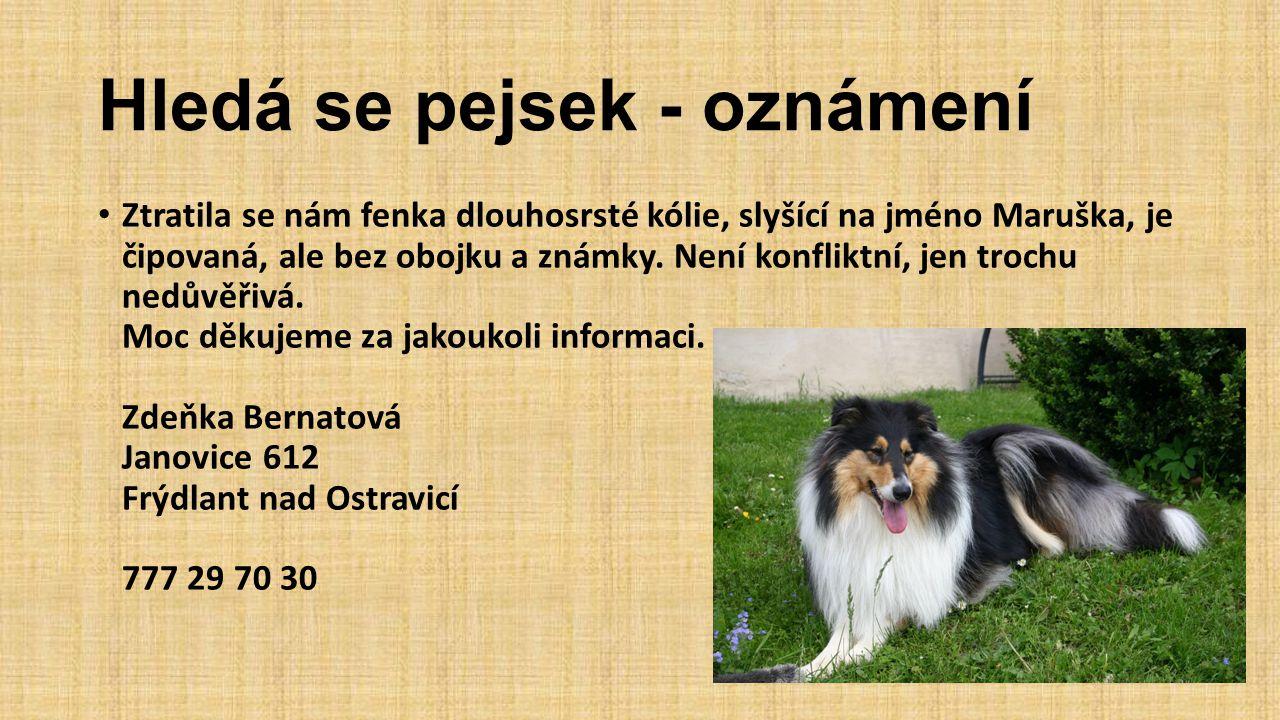 MěÚ Frýdlant n.O.oznamuje: Od dnešního rána (28.7.) máme v kotci opět psa.