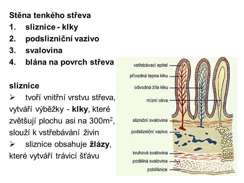 Stěna tenkého střeva 1.sliznice - klky 2.podslizniční vazivo 3.svalovina 4.blána na povrch střeva sliznice  tvoří vnitřní vrstvu střeva, vytváří výbě