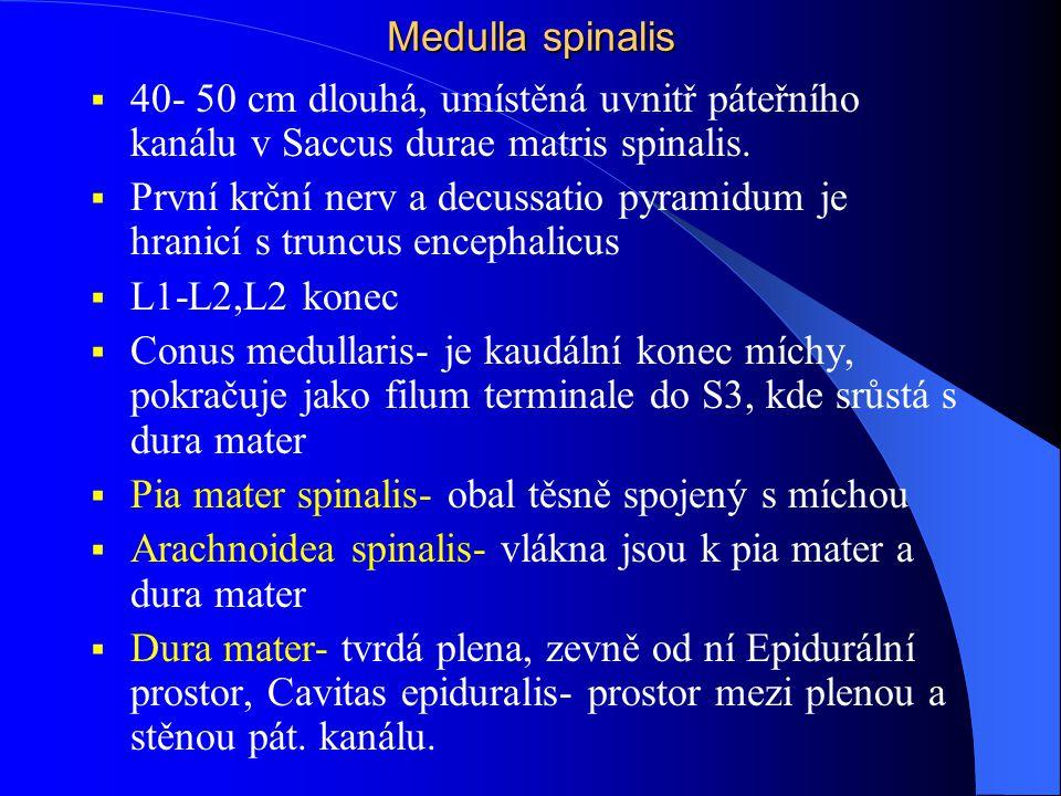 Medulla spinalis  40- 50 cm dlouhá, umístěná uvnitř páteřního kanálu v Saccus durae matris spinalis.  První krční nerv a decussatio pyramidum je hra