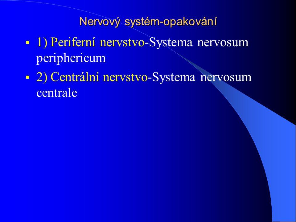 Nervový systém-opakování  1) Periferní nervstvo-Systema nervosum periphericum  2) Centrální nervstvo-Systema nervosum centrale