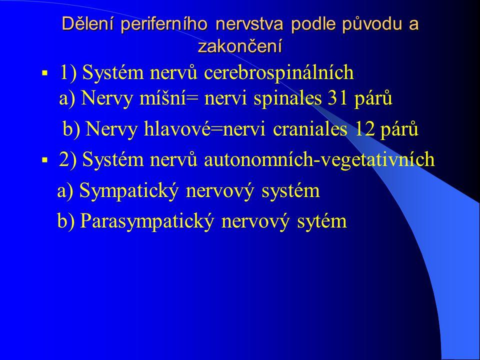 Dělení periferního nervstva podle původu a zakončení  1) Systém nervů cerebrospinálních a) Nervy míšní= nervi spinales 31 párů b) Nervy hlavové=nervi