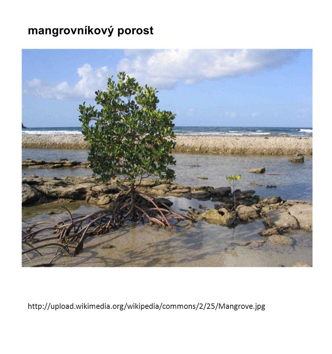 http://upload.wikimedia.org/wikipedia/commons/2/25/Mangrove.jpg mangrovníkový porost