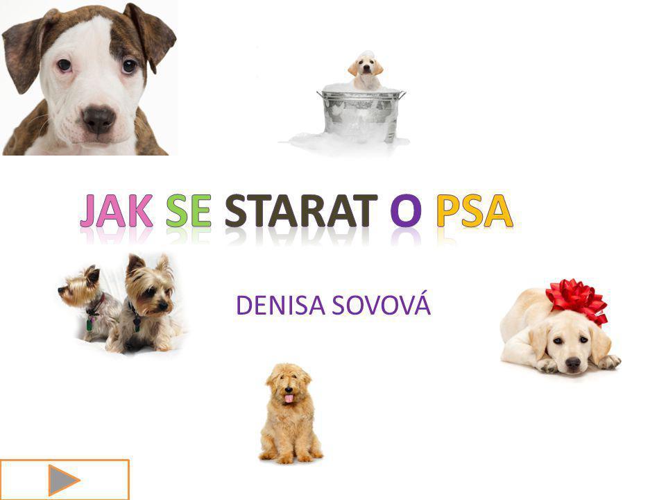 DENISA SOVOVÁ