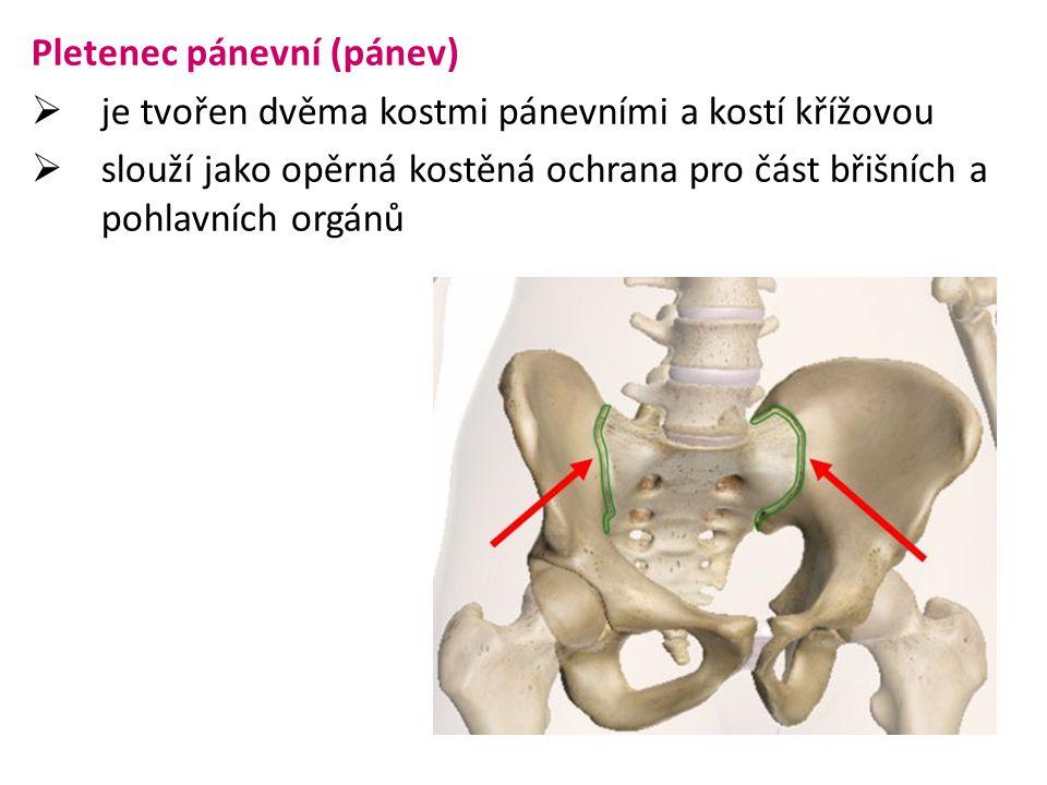 Pánev  je tvořena kostí pánevní a kostí křížovou  pánev mužská je užší a vyšší  pánev ženská je prostornější, širší a nižší mužská pánevženská pánev