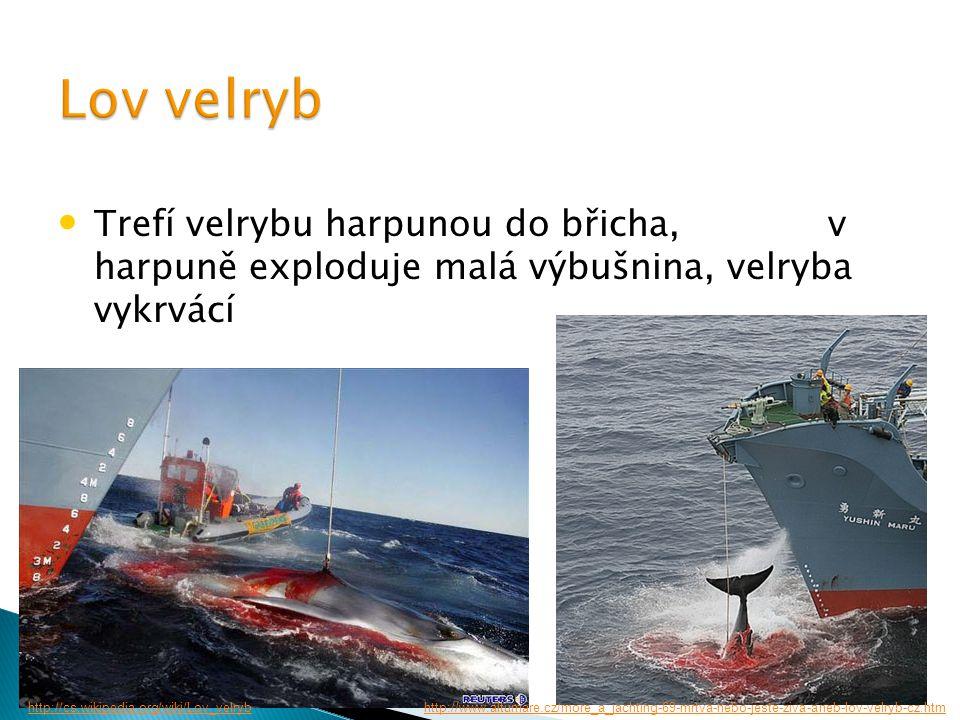 Trefí velrybu harpunou do břicha, v harpuně exploduje malá výbušnina, velryba vykrvácí http://www.altumare.cz/more_a_jachting-69-mrtva-nebo-jeste-ziva-aneb-lov-velryb-cz.htmhttp://cs.wikipedia.org/wiki/Lov_velryb