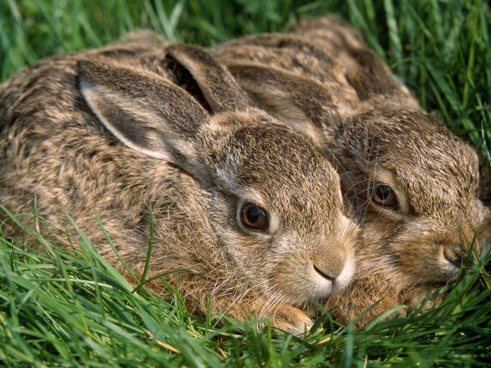 Láska má pozitivní vliv na všechny savce, dokonce i na jejich zdraví a délku života.