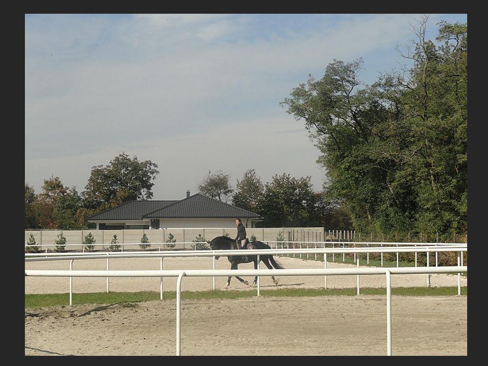 Jezdecká škola Ostopovic, která je také v areálu