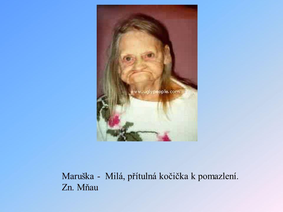 Maruška - Milá, přítulná kočička k pomazlení. Zn. Mňau