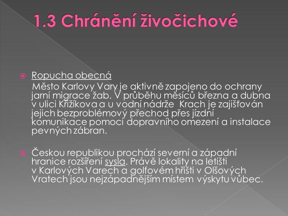  Ropucha obecná Město Karlovy Vary je aktivně zapojeno do ochrany jarní migrace žab.