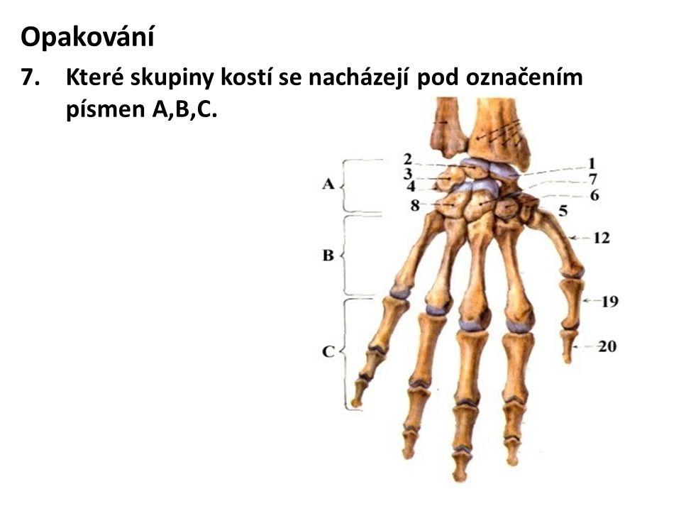 Opakování 7.Které skupiny kostí se nacházejí pod označením písmen A,B,C.