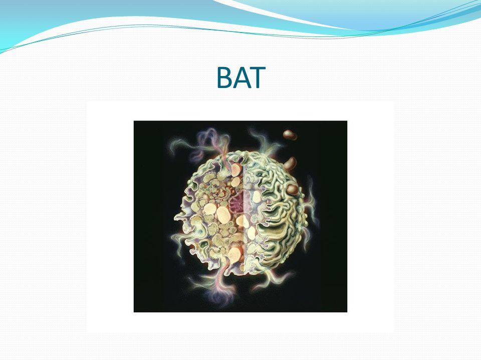 BAT-hodnocení výsledků ABSOLUTNÍ HODNOTA Počet bazofilů.