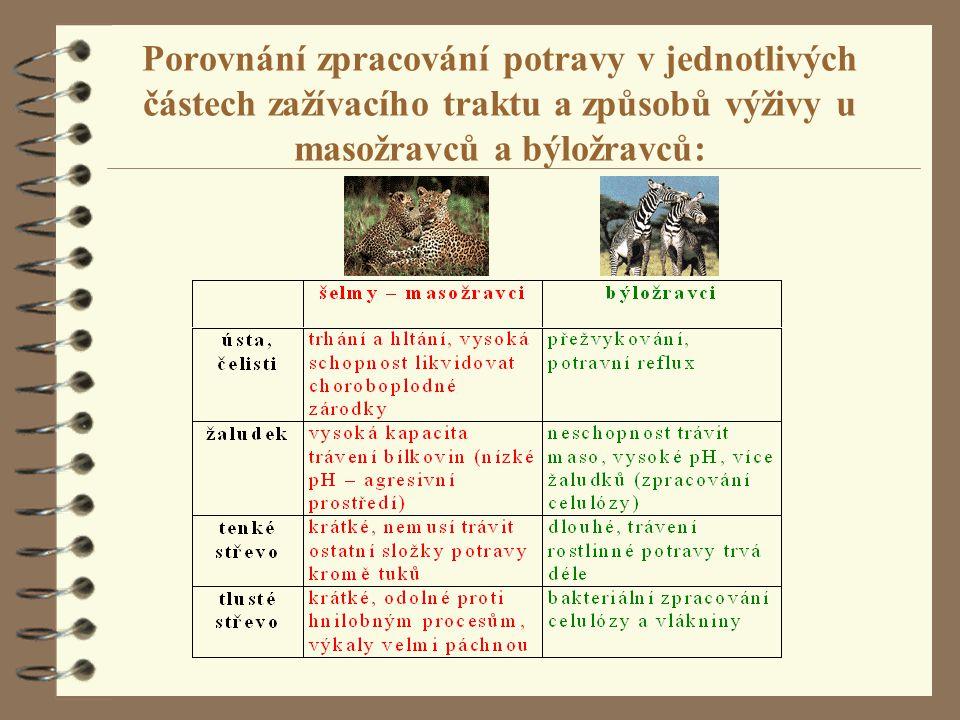 Základní dilema- člověk je: 4 sběrač = fruitarián 4 primitivní zemědělec = vegetarián 4 lovec a sběrač = fruitarián i masožravec 4 pokročilý zemědělec