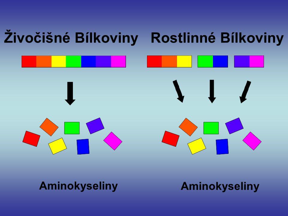 Živočišné Bílkoviny Rostlinné Bílkoviny Aminokyseliny