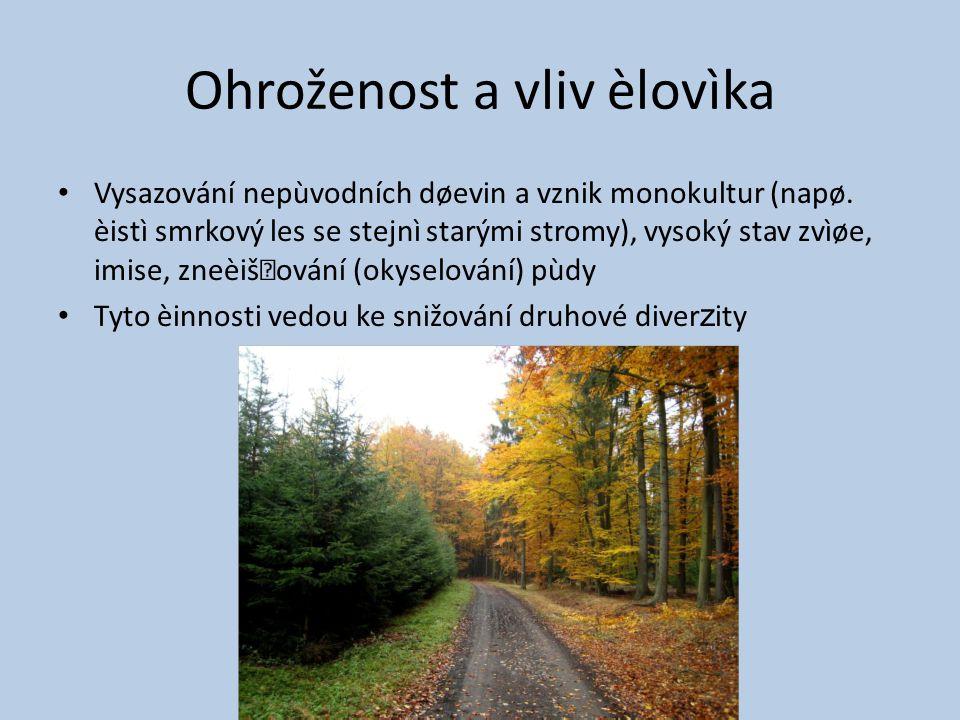 Ohroženost a vliv èlovìka Vysazování nepùvodních døevin a vznik monokultur (napø.