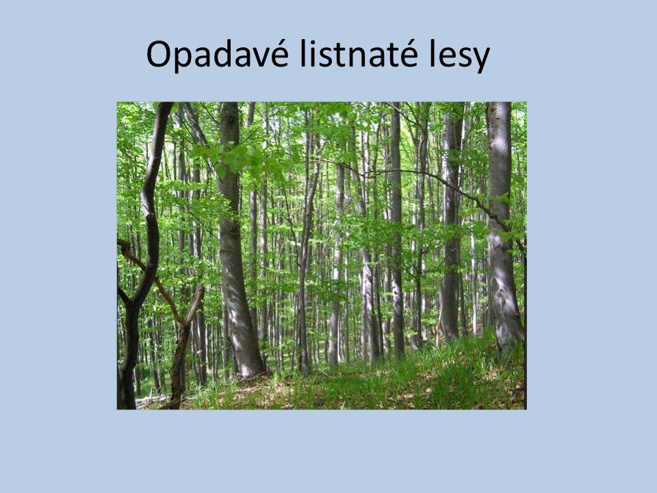 Opadavé listnaté lesy