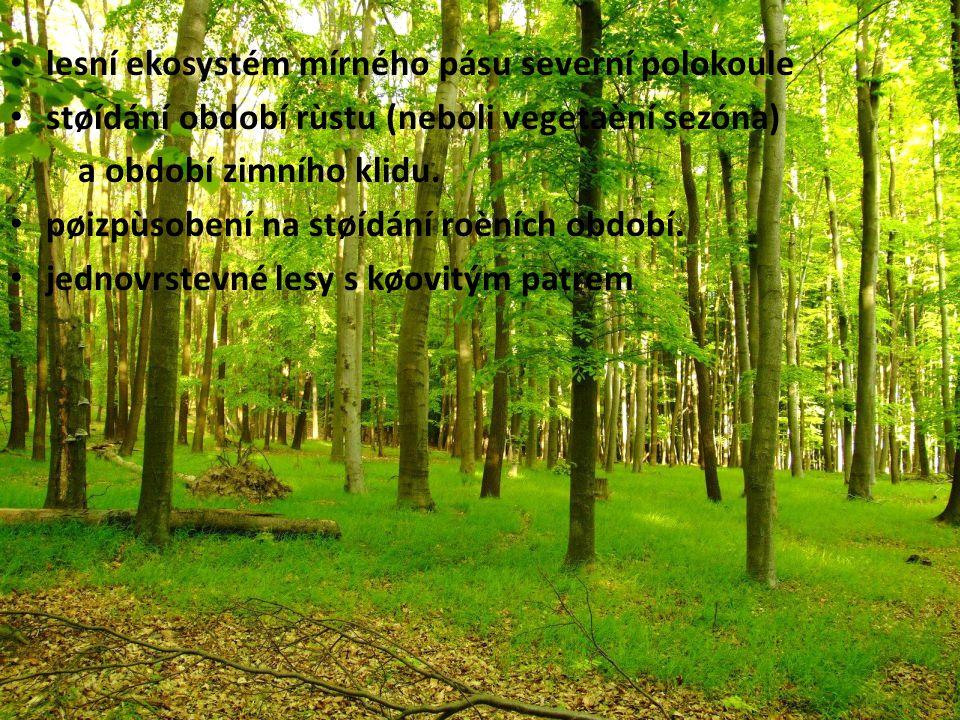 lesní ekosystém mírného pásu severní polokoule støídání období rùstu (neboli vegetaèní sezóna) a období zimního klidu.
