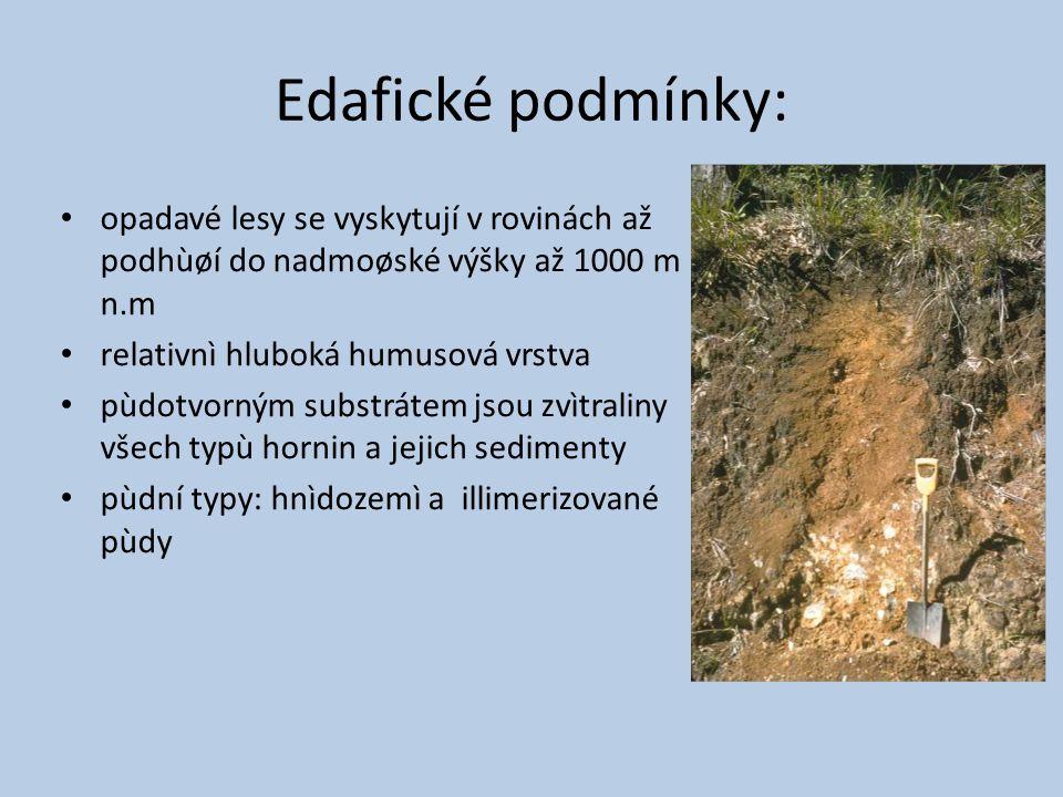 Edafické podmínky: opadavé lesy se vyskytují v rovinách až podhùøí do nadmoøské výšky až 1000 m n.m relativnì hluboká humusová vrstva pùdotvorným substrátem jsou zvìtraliny všech typù hornin a jejich sedimenty pùdní typy: hnìdozemì a illimerizované pùdy