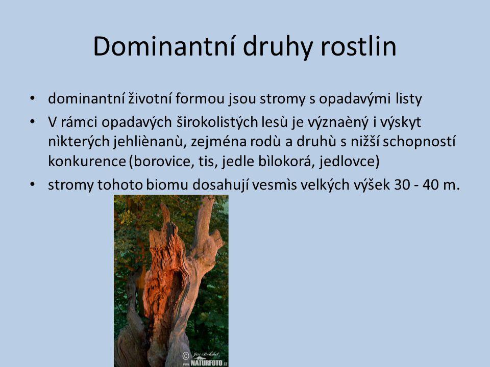 Dominantní druhy rostlin dominantní životní formou jsou stromy s opadavými listy V rámci opadavých širokolistých lesù je význaèný i výskyt nìkterých jehliènanù, zejména rodù a druhù s nižší schopností konkurence (borovice, tis, jedle bìlokorá, jedlovce) stromy tohoto biomu dosahují vesmìs velkých výšek 30 - 40 m.