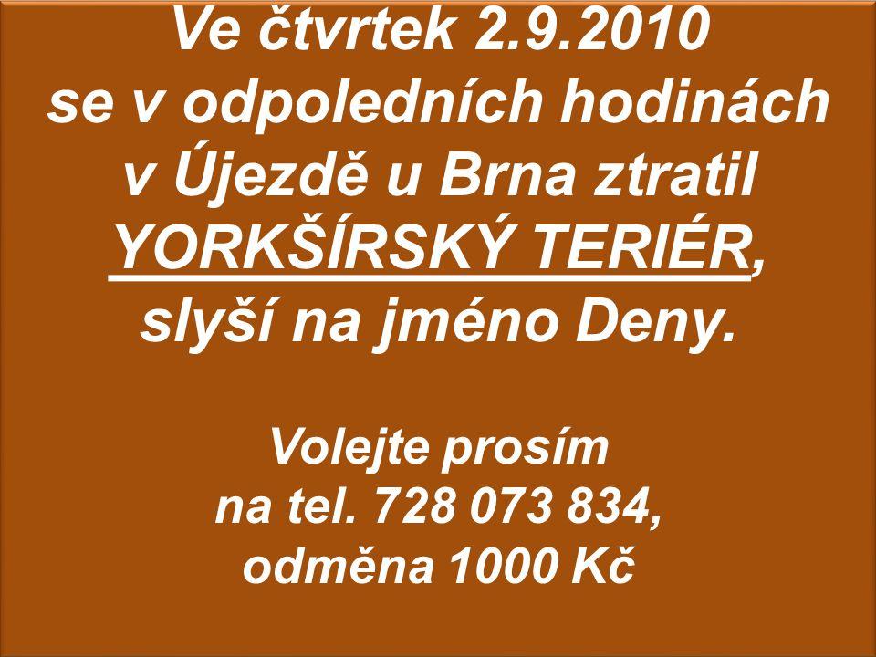 Ve čtvrtek 2.9.2010 se v odpoledních hodinách v Újezdě u Brna ztratil YORKŠÍRSKÝ TERIÉR, slyší na jméno Deny.