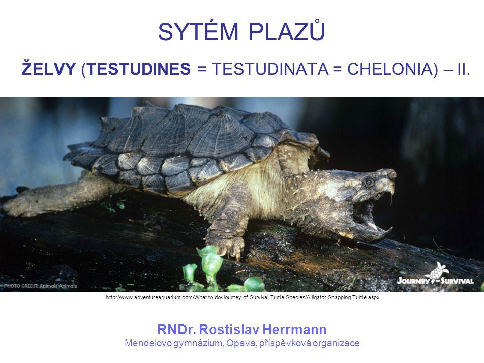 SYTÉM PLAZŮ ŽELVY (TESTUDINES = TESTUDINATA = CHELONIA) – II. RNDr. Rostislav Herrmann Mendelovo gymnázium, Opava, příspěvková organizace http://www.a