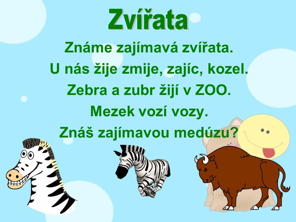 Známe zajímavá zvířata. U nás žije zmije, zajíc, kozel. Zebra a zubr žijí v ZOO. Mezek vozí vozy. Znáš zajímavou medúzu?