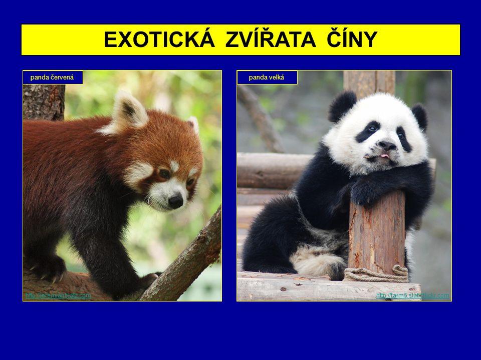 EXOTICKÁ ZVÍŘATA ČÍNY http://farm5.staticflickr.com panda červenápanda velká http://jeremiahblatz.com