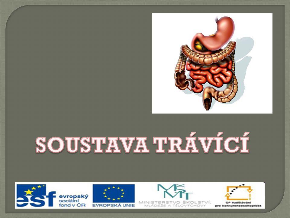 slinné žlázy ústní dutina hltan jícen žaludek slezina slinivka břišní játra žlučník tenké střevo tlusté střevo konečník
