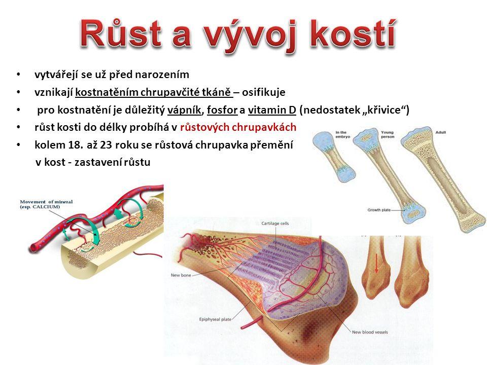 DNA vzniká působením špatné životosprávy přemíra masitých pokrmů konečným produktem jejich metabolismu je kyselina močová = krystalky se hromadí u kloubu – záněty léčba- dieta + léky OSTEOARTRITIDA u starších lidí opotřebování chrupavky věkem kosti o sebe třou