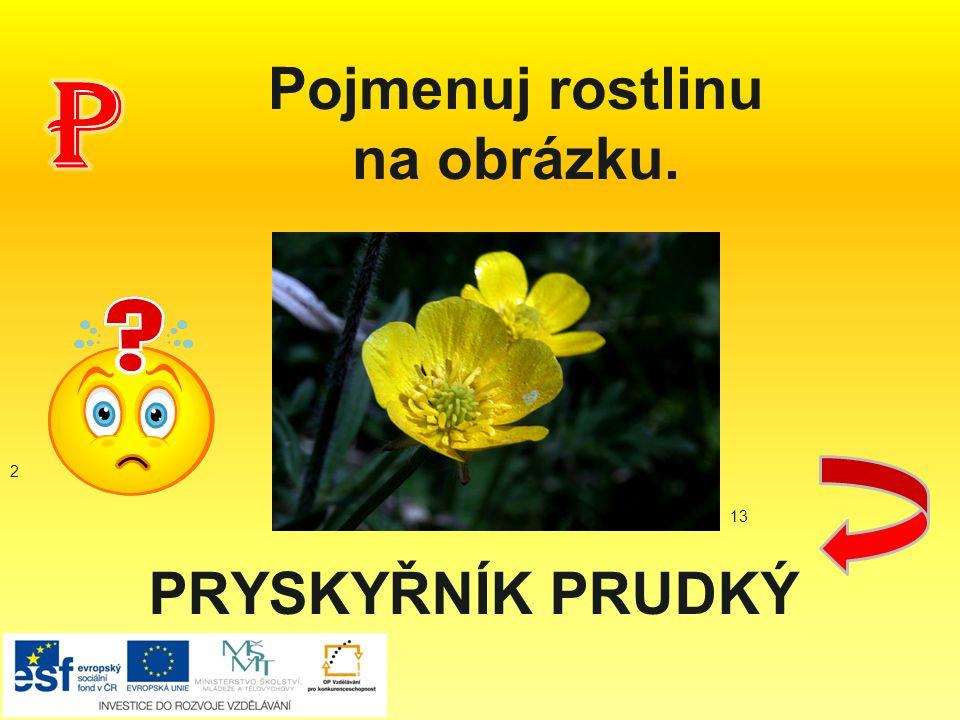PRYSKYŘNÍK PRUDKÝ Pojmenuj rostlinu na obrázku. 2 13
