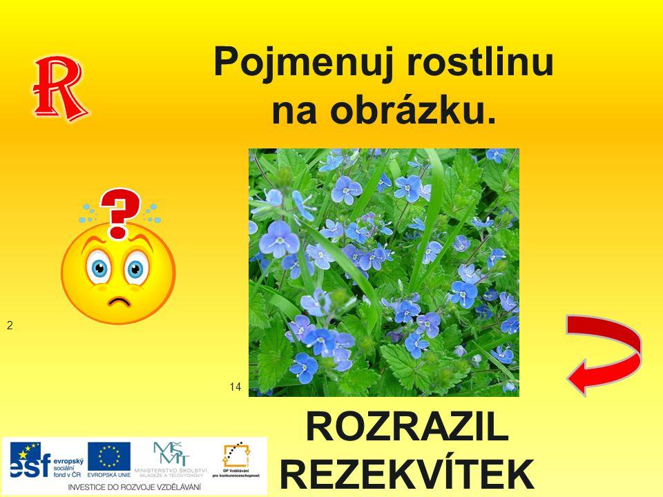 ROZRAZIL REZEKVÍTEK Pojmenuj rostlinu na obrázku. 2 14