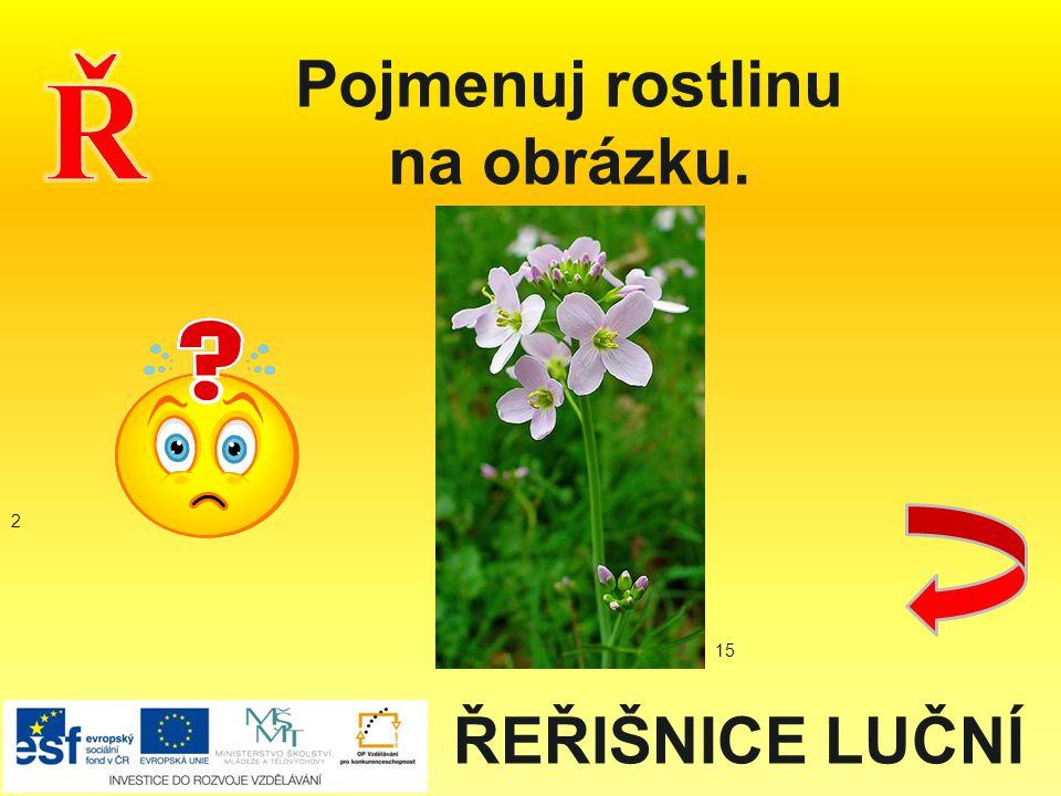 ŘEŘIŠNICE LUČNÍ Pojmenuj rostlinu na obrázku. 2 15