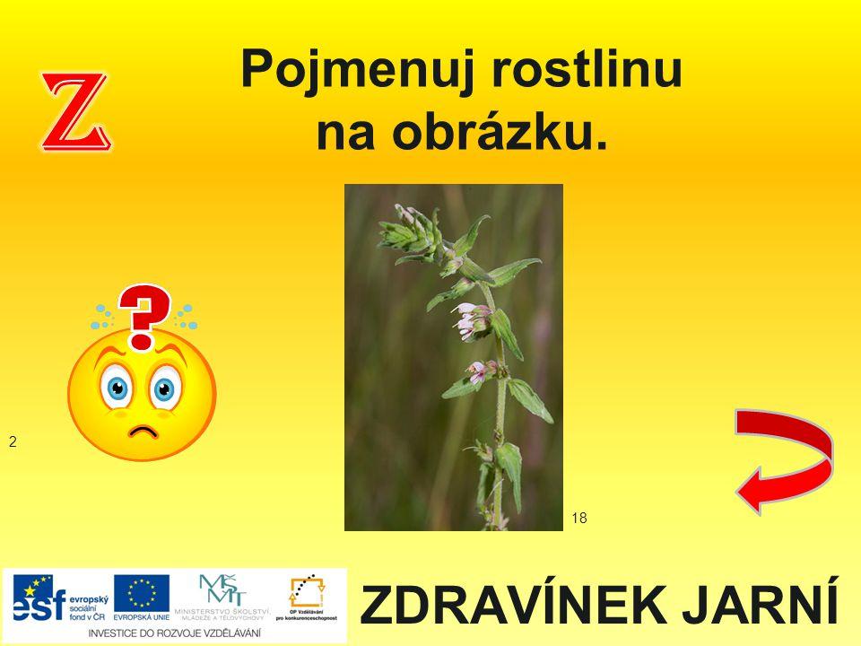 ZDRAVÍNEK JARNÍ Pojmenuj rostlinu na obrázku. 2 18
