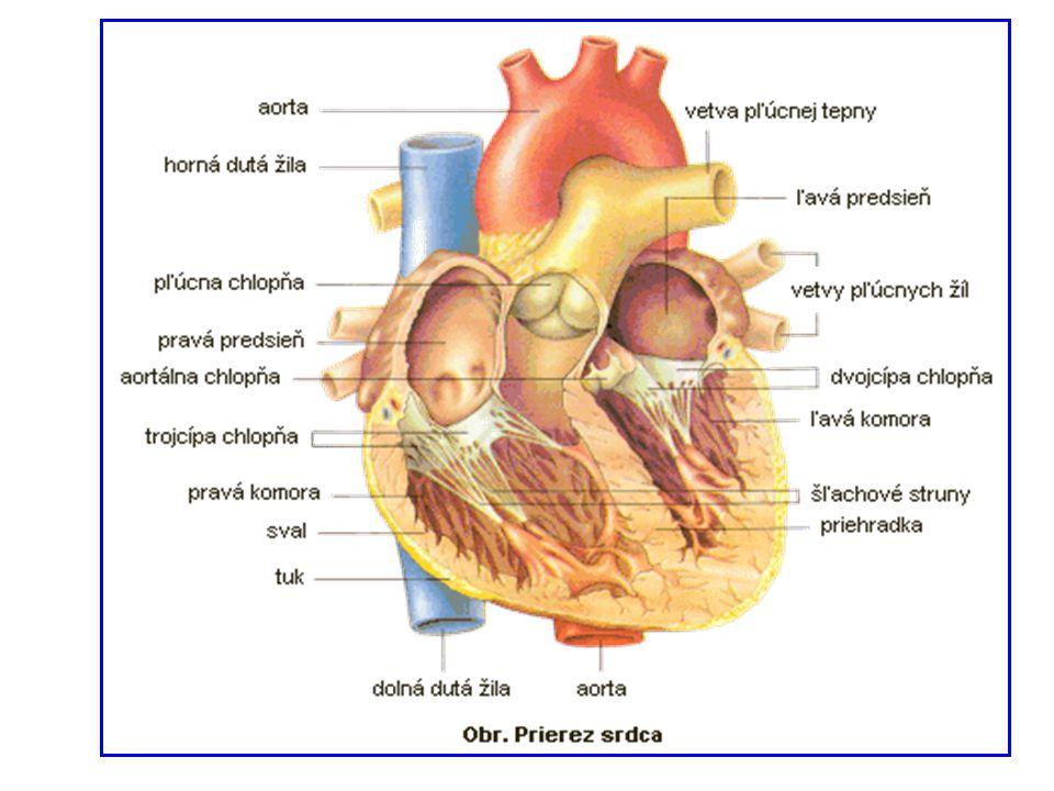 Funkce srdce  činnost srdce spočívá ve střídavém ochabnutí (diastola) a ve smrštění (systola) svaloviny  při diastole dochází k plnění části srdce krví  při systole se krev vypuzuje do tepen  systola a diastola na sebe navazují  stah je vyvolán elektrickým impulsem, který je vytvořen v převodním systému přímo ve svalovině Frekvence srdečních stahů (tep) 60 – 90 tepů za min
