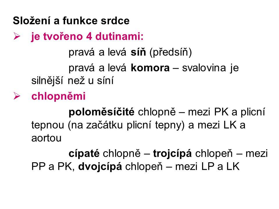 Složení a funkce srdce  je tvořeno 4 dutinami: pravá a levá síň (předsíň) pravá a levá komora – svalovina je silnější než u síní  chlopněmi poloměsíčité chlopně – mezi PK a plicní tepnou (na začátku plicní tepny) a mezi LK a aortou cípaté chlopně – trojcípá chlopeň – mezi PP a PK, dvojcípá chlopeň – mezi LP a LK