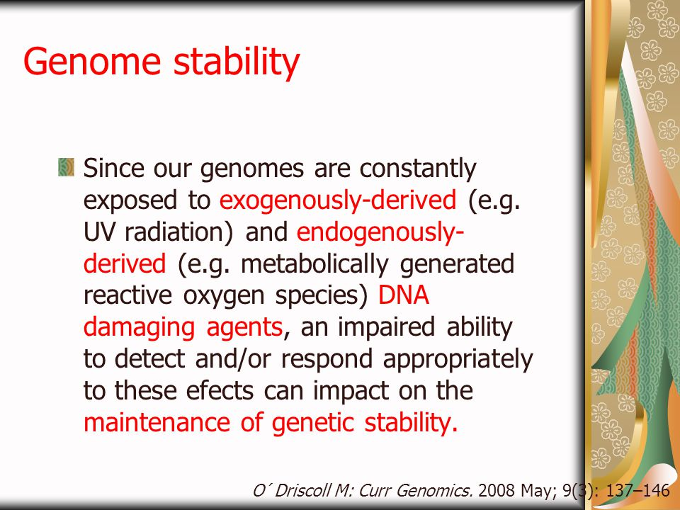 Genome stability Since our genomes are constantly exposed to exogenously-derived (e.g. UV radiation) and endogenously- derived (e.g. metabolically gen