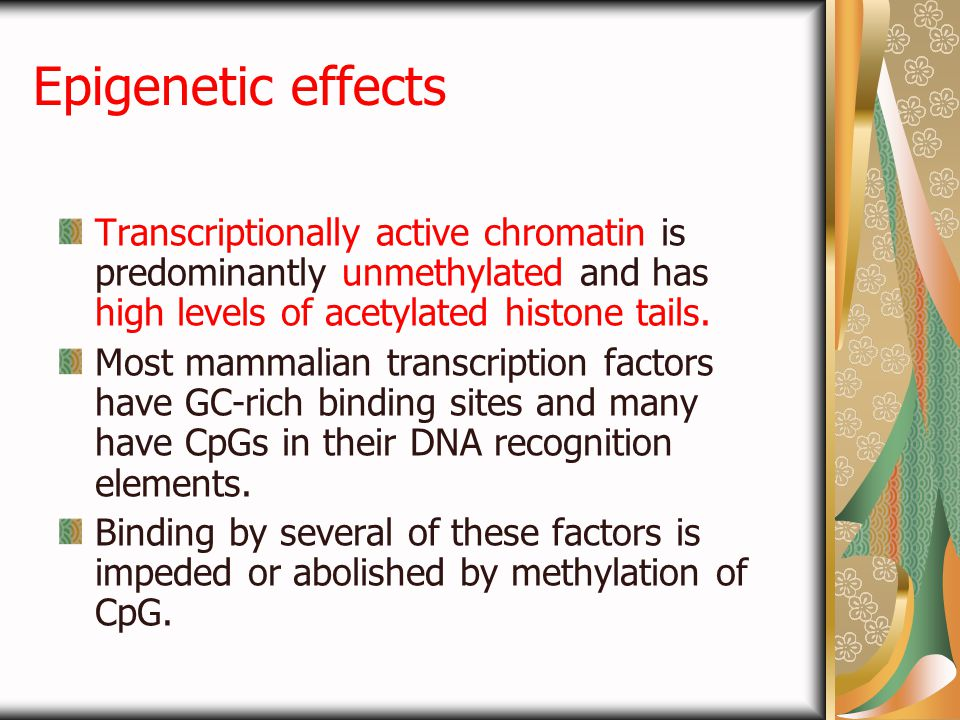 Epigenetic effects Transcriptionally active chromatin is predominantly unmethylated and has high levels of acetylated histone tails. Most mammalian tr