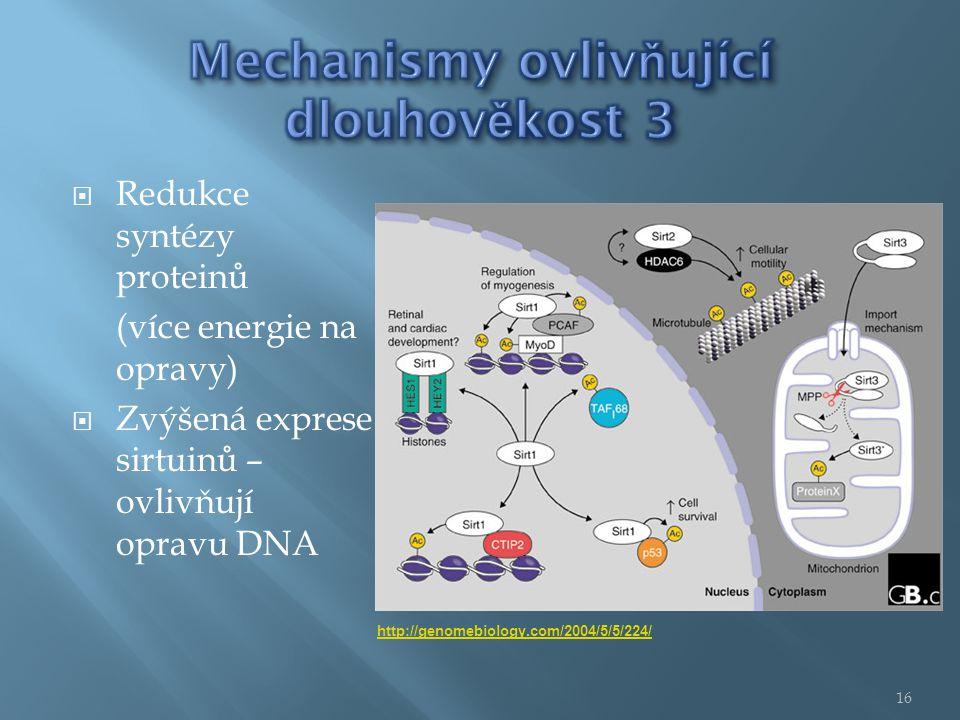  Redukce syntézy proteinů (více energie na opravy)  Zvýšená exprese sirtuinů – ovlivňují opravu DNA http://genomebiology.com/2004/5/5/224/ 16