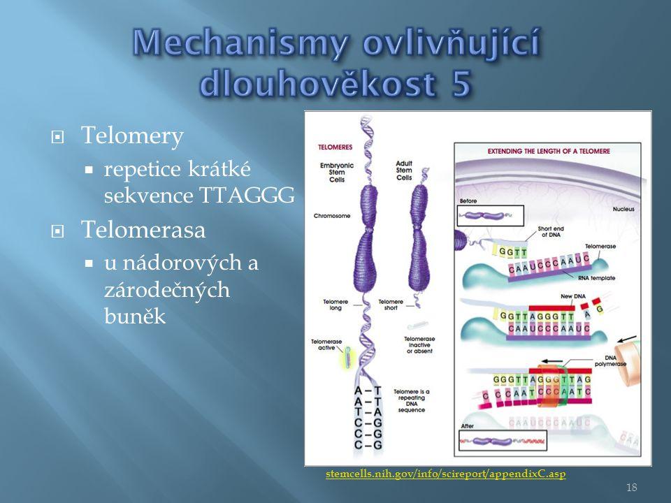  Telomery  repetice krátké sekvence TTAGGG  Telomerasa  u nádorových a zárodečných buněk stemcells.nih.gov/info/scireport/appendixC.asp 18